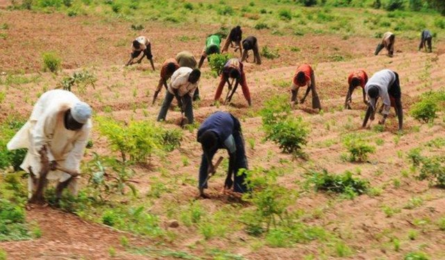 Farmers hail Buhari for stoppage of forex for fertilizer, food importation