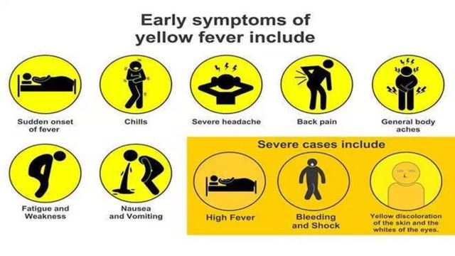 DEATHS FROM 'STRANGE DISEASE': 222 suspected cases of Yellow Fever, over 100m unvaccinated at risk