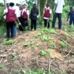 NDLEA destroys 40 hectares of hemp plantation in Oyo state