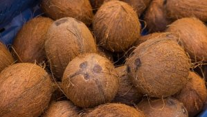 Coconut: Fear of seizure hinders production — Lagos Gov.