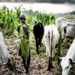 We are in Igbo land for business interest ― Herdsmen