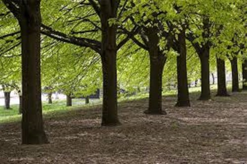 planting more trees will reduce carbon footprints — Environmentalist