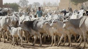 Raging Nigerian war: Fulani against the rest