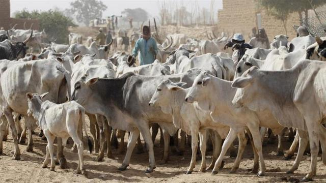 Raging Nigerian war: Fulani against the rest