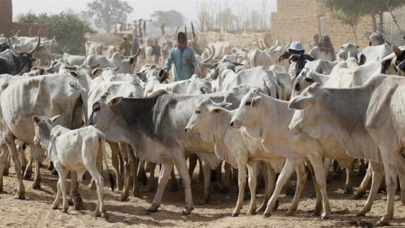 Insecurity: Miyetti Allah president lambasts Fulani leaders