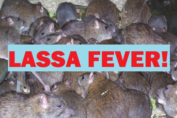 The Nigeria Governors' Forum (NGF) says it is working with the Federal Ministry of Health and other agencies to intensify efforts to control Lassa Fever in the country, as well prevent any case of the Coronavirus in the country.