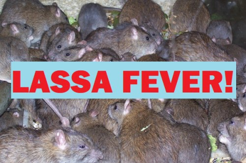 Lassa Fever Update: 4 deaths in Taraba, 1 in Kaduna