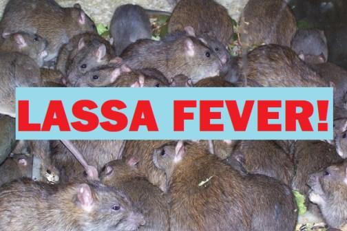 Lassa Fever in Borno