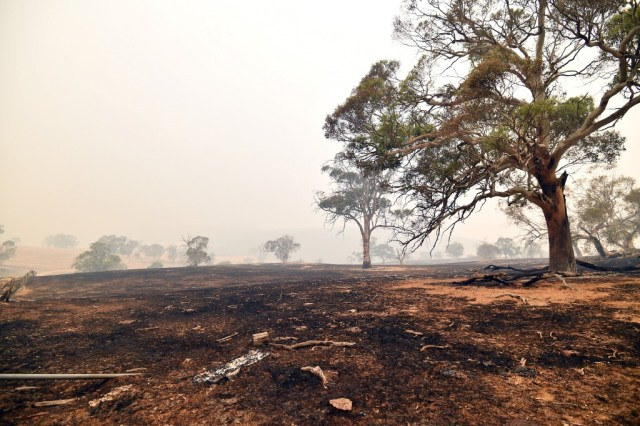 Australia 'open for business' as cool change eases ravaging bushfire