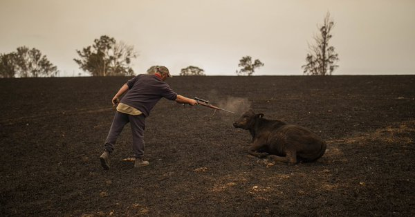 In Australia, hundreds of millions of animals feared dead in fires
