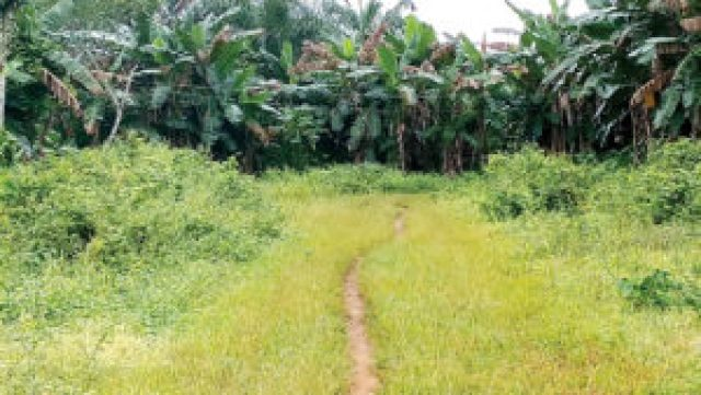 Middle-aged man kills cousin over N2m land sale