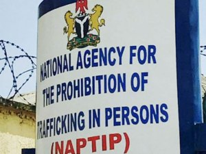 NAPTIP receives 8 rescued children, 2 suspected traffickers in Kano