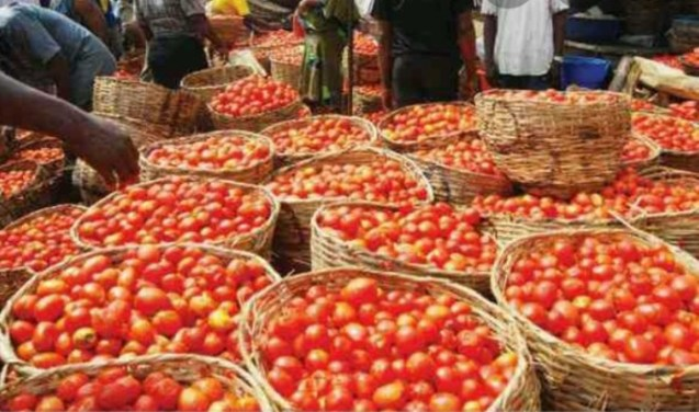 Lockdown: Basket of tomato, pepper flood Oyo markets, no buyers