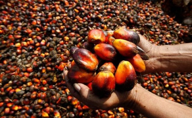 Why Nigeria should reclaim its position in Palm Oil Production