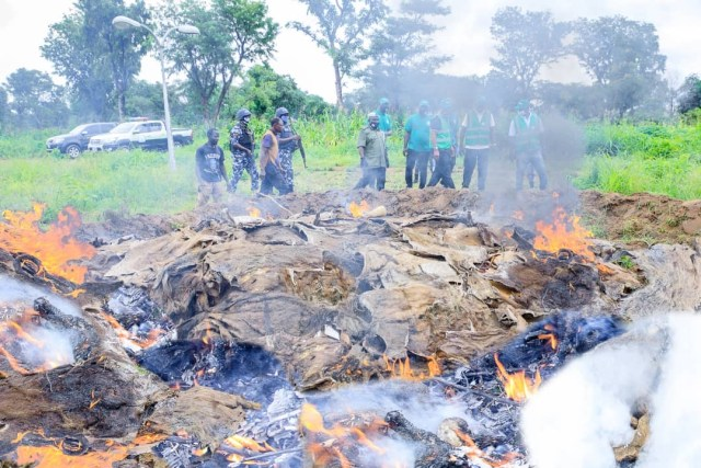 NAQS sets ablaze N42m worth illegally processed export-bound donkey skin