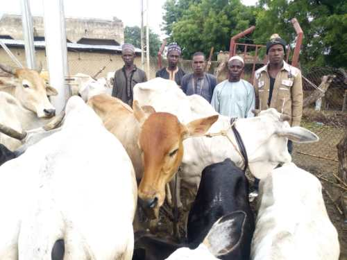 Anti-Banditry: Troops kill seven armed bandits, arrest six, recover 30 motorcycles & Rustled Cattle