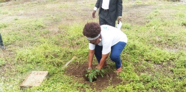 CODAF, Tree planting