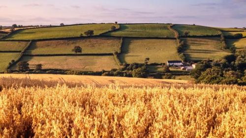 UK announces farming policy to replace EU subsidies after Brexit transition