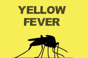 MSF research could save more lives from Yellow fever — Study