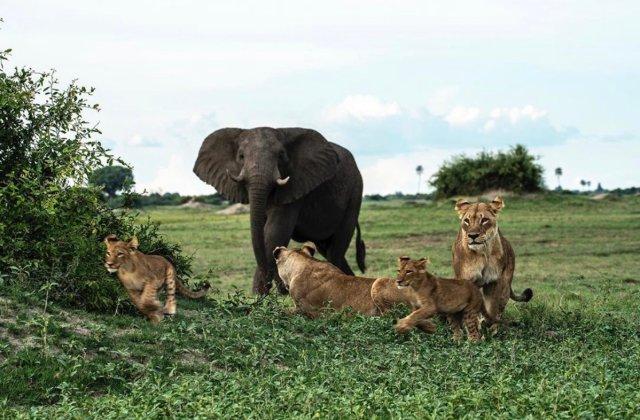 Nigeria has fewer than 50 lions, 100 gorillas, 500 elephants — WildAid