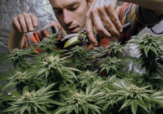 New York state legalizes recreational marijuana