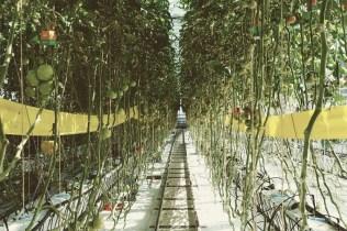 Urban Farmers Den Haag008