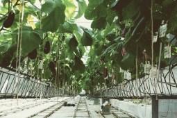 Urban Farmers Den Haag011