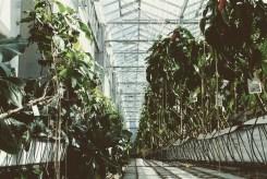 Urban Farmers Den Haag012