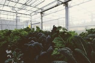 Urban Farmers Den Haag020