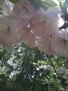 木の芽時の不調