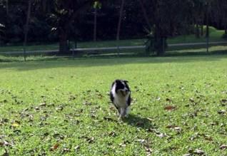 West Coast Dog Run Singapore