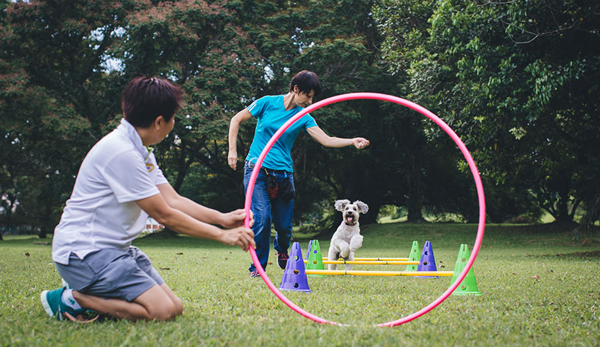 Cheerful Dogs games