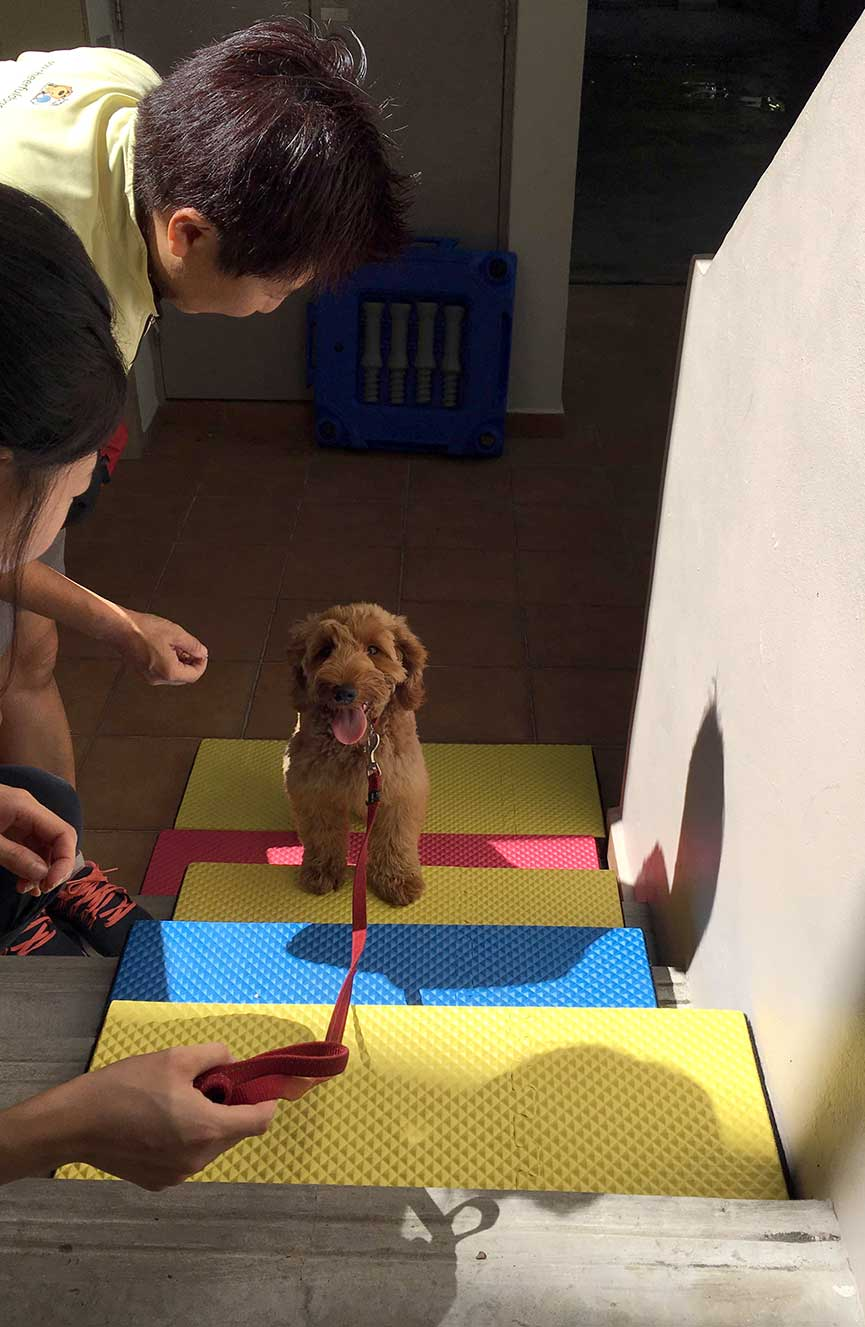 Puppy Socialisation with Cheerful Dogs