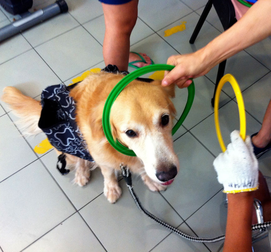 Pinot working to help a patient improve their motor skills