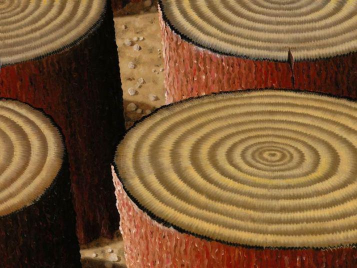 Detail Sequoiadendron Nemus sequoia