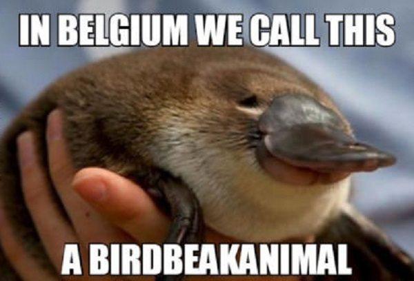 vogelbekdier