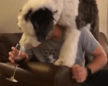 otis hond drinkt wijn