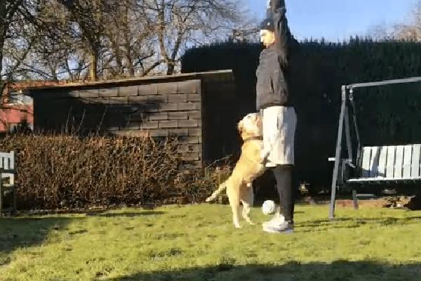 yoga hond tuin