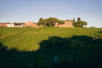 Weinfelder in der Toskana