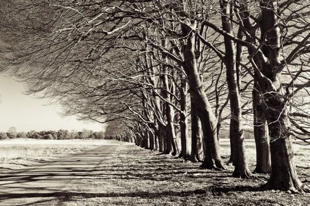 bomenrij - De Hoge Veluwe