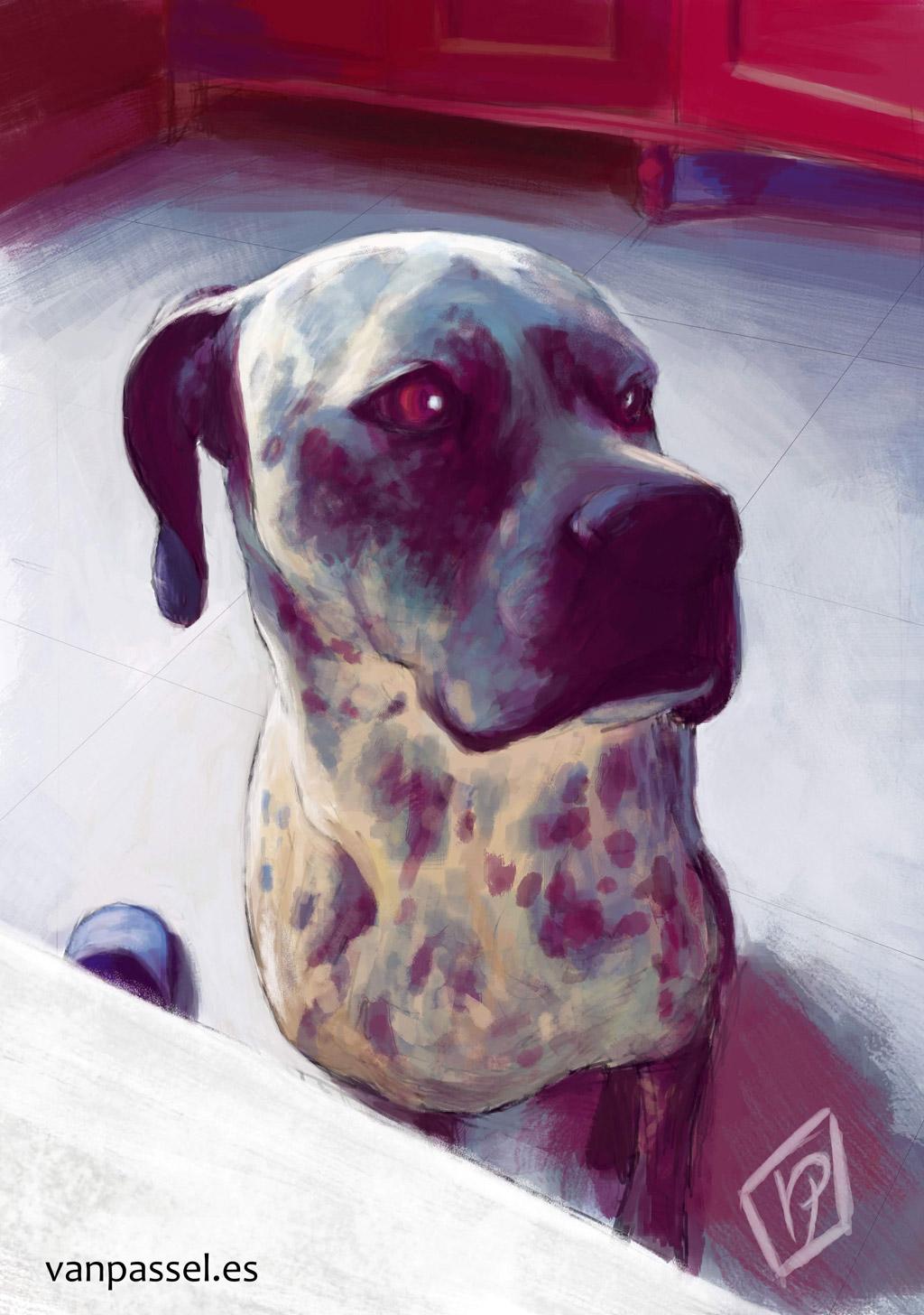 Dog red love