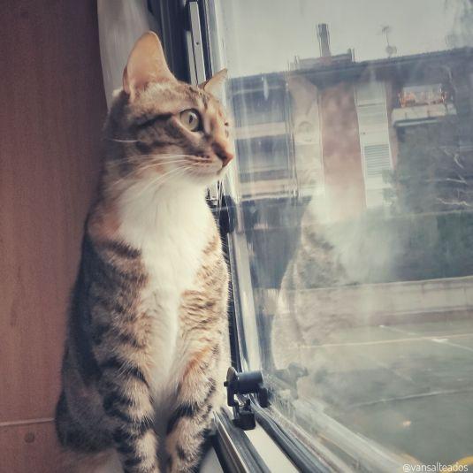 Selash, nuestra gata en la autocaravana