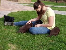 flatcoated pups 13mrt6
