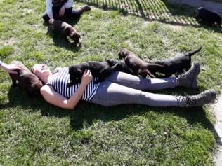 flatcoated pups 4april2
