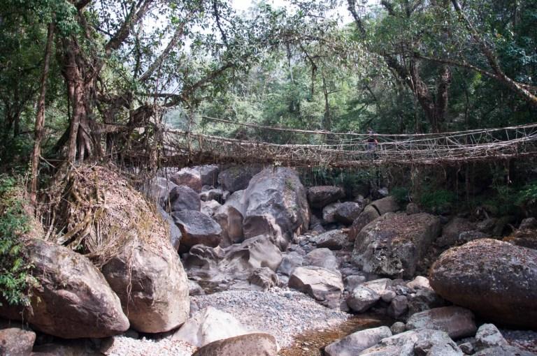 Přecházení kořenových mostů