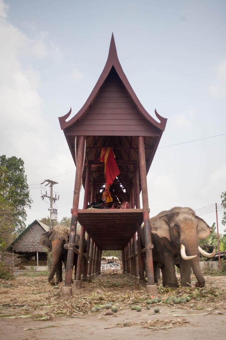 Parkoviště pro slony
