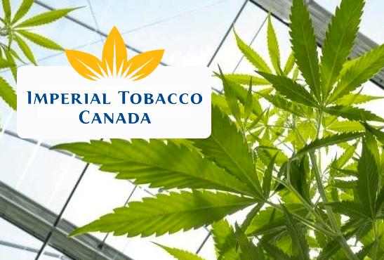 CANADA: Imperial Tobacco richiede equità tra tabacco e cannabis.
