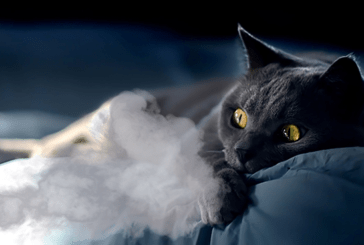 HEALTH: Passive smoking, a danger to our animals!