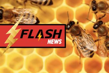 ÉCOLOGIE : Le Petit Vapoteur récolte les fruits de sa démarche éco-responsable !