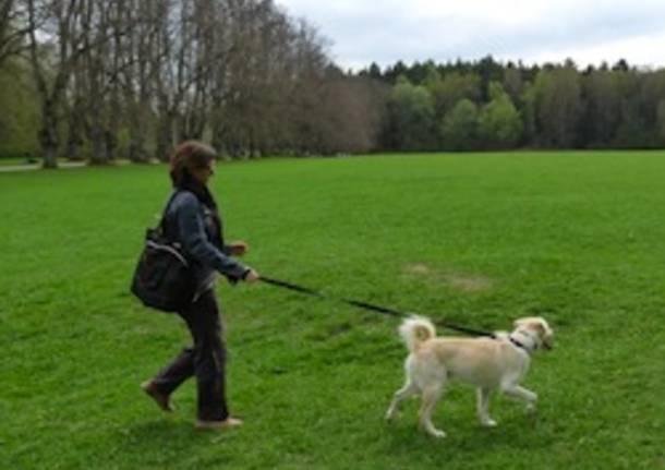 area cani parco animali apertura